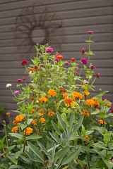 container garden (jojoannabanana) Tags: flowers garden blog backyard colorful herbs sage rosemary zinnia marigold containergarden