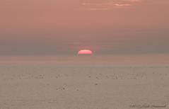 Belgian coast (Natali Antonovich) Tags: belgiancoast seasideresort seaboard seashore seaside northsea sea water horizon romanticism sunset sun nature landscape
