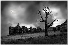 The old mine works (Hugh Stanton) Tags: ruins dead tree atmosphere mono