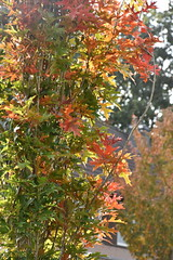 Autumn leaves (LidyvN) Tags: leave autumn icm movement green yellow brown wood tree orange red season nature forest