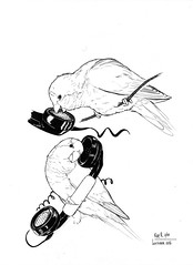 Inktober 2 (rose.robin) Tags: inktober inktober2016 inktober16 cotorra monk parrakeet monkparrakeet ink bird