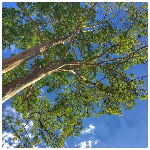 #guatemala #trees #arboles #sky #cielo