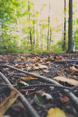 Forest Floor (trouble4dan) Tags: 2016 danhamill bush fall forest leaves sticks trees