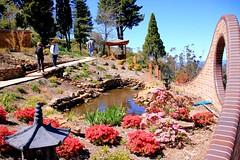 2016-10-05_Leura_5-OPT (marcus77clark) Tags: flowers wentworth falls leura katoomba mountains everglades tomah national park nsw australia waratah