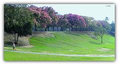 Quinta da Boa Vista (o.dirce) Tags: quintadaboavista riodejaneiro cidademaravilhosa o dirce