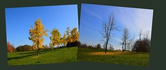 Before and after (only_sepp) Tags: autunno foglie allaperto allnaturesparadise alberi cielo fogliegialle alberispogli fogliecadute leaves