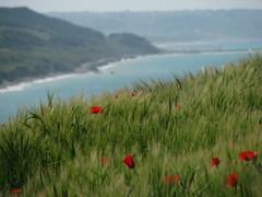 Punta Aderci, Abruzzo (silvia.mincarelli1) Tags: costaadriatica abruzzo puntaaderci papavero poppy