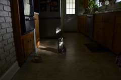 mornings at home (a.n.decker photography) Tags: sunlight andecker cats light sun sunshine fall autumn home house kitchen nostalgia morningseries morning goodmorning nikon pets animals digital lighting shadow casa