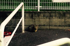 Today's Cat@2016-11-27 (masatsu) Tags: cat thebiggestgroupwithonlycats catspotting pentax mx1