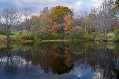 Autumn Remnant Reflections (Daniel Portalatin Photography) Tags: pennsylvania autumn fall landscape delawarewatergap forests outdoors water lake brook