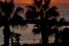 Last swim (fxdx) Tags: last swim palm sea sunset tenerife spain lf1 silhouette