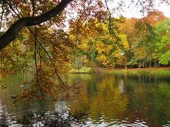 Autumn (Hannelore_B) Tags: herbst autumn baum tree kaiserpark oberhausen