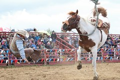 """You've Been Served!"" (cowgirlrightup) Tags: raining bronc cowboy rodeo alberta cowgirlrightup"