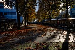 Autumn on the Wharf 13th Nov (21 of 37) (johnlinford) Tags: autumn canarywharf canon canonefs1022 canoneos7d docklands e14 landscape london towerhamlets urban urbanautumn