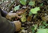 cueillette d'automne (jean-marc losey) Tags: france aquitaine lotetgaronne cueillette cèpe champignon randonnée p7000