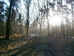 fullsizeoutput_61d (spooky.iphone) Tags: kalmthout trailrunning training