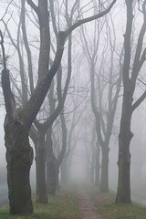 misty alley... (green_lover) Tags: trees street fog mist november autumn fall town żyrardów poland vanishingpoint seasons thechallengefactory winner unanimous