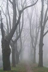 misty alley... (green_lover) Tags: trees street fog mist november autumn fall town yrardw poland vanishingpoint seasons