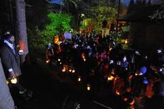La-magia-del-bosco-di-notte-2016-41