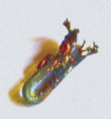 Corrosion (wildrosetn39) Tags: corrosion metal element heat abstract shadow