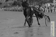 Course Lancieux (photos par JPS) Tags: clean cheval lancieux ou pro quoi type