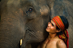 Close up face elephant and Mahout man (Sutipond Somnam) Tags: safari african animal kenya africa india art asia asian portrait background zoo savanna motion wild park sky tribal indian outdoors masai power desert isolated wallpaper mammal column elephant shadow character walk clouds refined vintage nature fangs large environment wildlife jungle closeup face man people cambodia burma laos