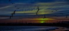 Sunset / Long Beach Marina--in explore (beachpeepsrus) Tags: water beach birds blackskimmers shore sky sunset sihlouette sun clouds california color marina masts m