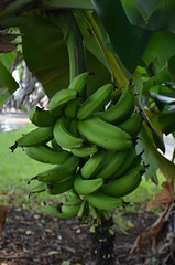 Banana Airport