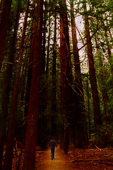 Avenue of the Giants 2016_008ac (DrewOtt) Tags: avenueofthegiants trees california northerncalifornia redwoods path nature figure