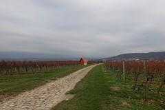 In den Weinbergen - Blick auf Gau-Algesheim und Ingelheim (Belichtungszeit: 1/200, Blende: 5,6, Brennweite entsprechend 35 mm-Kleinbild: 24)