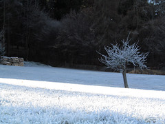 Advent im Spessart 1 - EXPLORE (MKP-0508) Tags: advent avent spessart raureif winter hiver natur whitefrost hoarfrost givre frimas frostig glacé frosty inexplore explore tree baum arbre