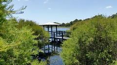 receding waters at the boardwalk (ClareSnow) Tags: boardwalk melaleucarhaphiophylla waterlevel recedingwater lake naturereserve lakegwelup lakegwelupreserve perth australia summer