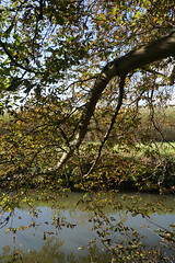 Near Byron's Pool, Grantchester (Neil Pulling) Tags: uk cambridge england riverside cam eastanglia grantchester granta byronspool byronspoolgrantchester