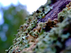 "Lichen (Extreme Depth of Field) • <a style=""font-size:0.8em;"" href=""http://www.flickr.com/photos/34843984@N07/15238460870/"" target=""_blank"">View on Flickr</a>"