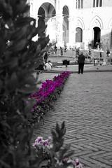 Magenta Day (Domenico A.) Tags: del nikon italia day magenta tuscany campo siena piazza toscana 18105 d5200