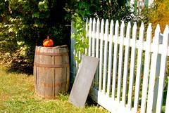 Autumn at Slate Run Historical Farm (LaLa83) Tags: autumn ohio orange white fence pumpkin farm sony barrel marcy september slate alpha picketfence 2014 metroparks hff a230 slaterun pickawaycounty slaterunhistoricalfarm happyfencefriday
