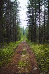(thisisforlovers) Tags: light sunset wild naturaleza verde green luz nature finland atardecer lapland puestadesol midnightsun finlandia laponia salvaje finnishlapland naturalezasalvaje laponiafinlandesa