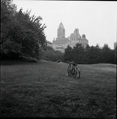 NYC 288 (glucozze) Tags: park nyc bw ny newyork film centralpark manhattan central nb rolleicord
