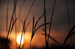 that time (christiaan_25) Tags: autumn light shadow orange sun black fall nature grass silhouette season evening stem glow quiet explore 184 oct62014