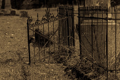 Cemetery Gate (DancingTerrapin) Tags: old fall cemetery grave grass leaves metal sepia ga georgia october gate downtown antique headstone magnolia marker augusta 2014 augustaga augustageorgia magnoliacemetery downtownaugustaga