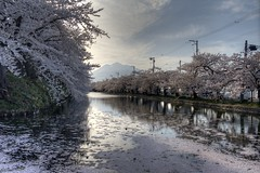 Japan2014_0472 HDR (wallacefsk) Tags: flower japan  sakura hirosaki tohoku hdr  hirosakipark