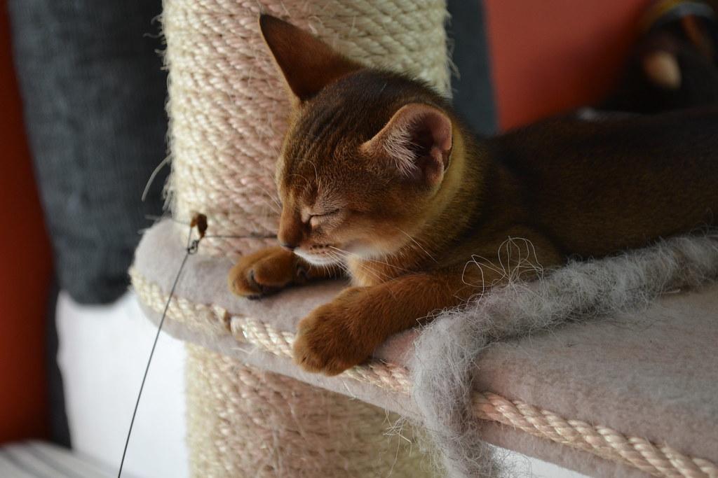 くつろぐ猫の横顔