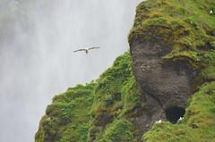 Islandia - Skógafoss (eduiturri) Tags: islandia skógafoss
