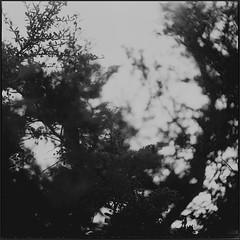 everyday as a moment in echoes 10 (declic65.miura) Tags: 120 6x6 blackwhite expiredfilm skopar adoxchs100 voigtländersuperb
