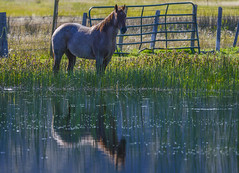(b.wolfer) Tags: life wild nature utah photo dramatic nat images photographs national lucid geo geographic journalism