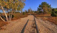 Nemitzer Heide 2 (Metal Maik) Tags: trees tree nature canon germany landscape deutschland sand track path natur birch landschaft bume baum hdr heide birke pfad niedersachsen wendland lchowdannenberg sandweg birken nemitz tonemapping heidekraut sigmaex1020mm canoneos70d nemitzerheide eos70d sandpfad maikrichter