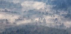 fog rising (csnyder103) Tags: morning mist fog northcarolina blueridgeparkway canoneos6d canon100400f4556isl