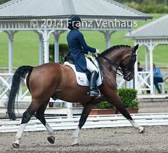 141024_2014_AUS_D_Champs_4245.jpg (FranzVenhaus) Tags: horses performance sydney australia competition event nsw athletes aus equestrian riders dressage siec