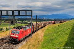 DB 185 137-7, Mühlau (MacCookie) Tags: 185137 1851377 61851377ddb 9180 bahnhofmühlau baureihe185 bombardier br185 cantonofaargau class185 class185xs class1851 confoederatiohelvetica db dbcargo dblogistics dbschenker dbc dbs deutschebahn deutschebahnag europe germanrailways kantonaargau muri mühlau mühlaustation schweiz suisse svizzera swissconfederation switzerland traxx traxxf140ac1 bahn cargotrain eisenbahn electriclocomotive engine freighttrain güterzug locomotive railways zug aargau
