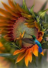 flor (siniparxi) Tags:  biologika       biologikaproionta